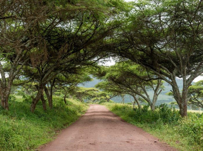 TANZANIA RESUMES TOURISM WITH STRICT PREVENTIVE MEASURES